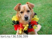 Fussballfan. Стоковое фото, фотограф Zoonar.com/Antje Lindert-Rottke / easy Fotostock / Фотобанк Лори