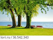 Sitzbänke unter grossem Silber-Ahorn Baum am Ufer des Bodensees bei... Стоковое фото, фотограф Patrick Frischknecht / age Fotostock / Фотобанк Лори