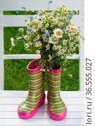 ESY-059730870. Стоковое фото, фотограф Zoonar.com/Judith Dzierzawa / easy Fotostock / Фотобанк Лори