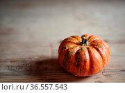 Kleiner orangefarbener Kuerbis im Herbst. Стоковое фото, фотограф Zoonar.com/Nailia Schwarz / age Fotostock / Фотобанк Лори
