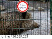 Wildschweine füttern verboten. Стоковое фото, фотограф Zoonar.com/Martina Berg / easy Fotostock / Фотобанк Лори