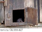 Ferkel im Schweinestall. Стоковое фото, фотограф Zoonar.com/Martina Berg / easy Fotostock / Фотобанк Лори
