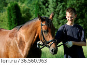 Junger Mann mit Reitpferd. Стоковое фото, фотограф Zoonar.com/Martina Berg / easy Fotostock / Фотобанк Лори