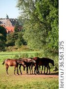 Pferde auf einer Koppel, im Hintergrund Schloß Hämelschenburg in Niedersachsen... Стоковое фото, фотограф Zoonar.com/Martina Berg / easy Fotostock / Фотобанк Лори