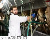 Dairymaid young man working with automatical cow milking machines. Стоковое фото, фотограф Яков Филимонов / Фотобанк Лори