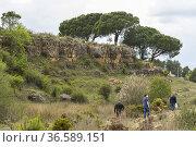Pedro Fito. Rambla de Sugel. Almansa. Albacete Castilla-La Mancha... Стоковое фото, фотограф Antonio Real / age Fotostock / Фотобанк Лори