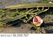 Reste eines alten Holzbootes im Schlamm am Ufer, Spanien. Стоковое фото, фотограф Zoonar.com/Karl Heinz Spremberg / easy Fotostock / Фотобанк Лори