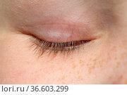 Wimper, Auge, Lid, Стоковое фото, фотограф Zoonar.com/Manfred Ruckszio / age Fotostock / Фотобанк Лори