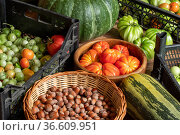 Harvest of fresh tomatoes in crates, pumpkin, courgettes and basket with hazelnuts stacked on the floor. Стоковое фото, фотограф Евгений Харитонов / Фотобанк Лори