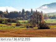 Reiter in der Herbstlandschaft in Pfronten im Allgäu, Bayern, Deutschland... Стоковое фото, фотограф Zoonar.com/Dirk Rueter / age Fotostock / Фотобанк Лори