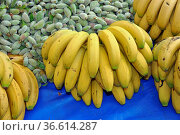 Banane, bananen, bananenplantage, bananenstaude, bananenbaum, obst... Стоковое фото, фотограф Zoonar.com/Volker Rauch / easy Fotostock / Фотобанк Лори