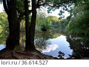 Maunzenweiher , Frankfurt, weiher, teich, see, waldsee, baum, bäume... Стоковое фото, фотограф Zoonar.com/Volker Rauch / easy Fotostock / Фотобанк Лори