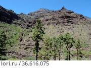 Landschaft , Mogan, Gran Canaria, kanaren, kanarische inseln, spanien... Стоковое фото, фотограф Zoonar.com/Volker Rauch / easy Fotostock / Фотобанк Лори