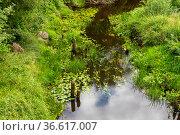 Река Тигода в черте города Любань, Ленинградская область. Стоковое фото, фотограф Александр Щепин / Фотобанк Лори