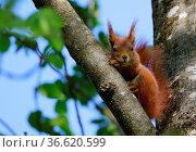 ZON-7328916. Стоковое фото, фотограф Zoonar.com/Sieghart Mair / age Fotostock / Фотобанк Лори