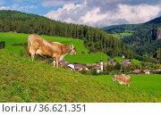 St. Lorenzen 01. Стоковое фото, фотограф Zoonar.com/Liane Matrisch / easy Fotostock / Фотобанк Лори