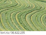 Gemähte Wiese, landwirtschaft, wiese, weide, gras, mähen, landschaft... Стоковое фото, фотограф Zoonar.com/Volker Rauch / easy Fotostock / Фотобанк Лори