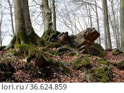 Bäume und Felsen am Hohenstein. Стоковое фото, фотограф Zoonar.com/Martina Berg / easy Fotostock / Фотобанк Лори