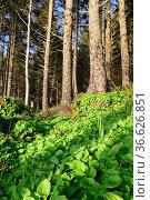 Pine forest landscape. Стоковое фото, фотограф Арестов Андрей Павлович / Фотобанк Лори