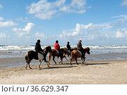 Reiter, Strand, Roemoe, Pferde, Pferdesport, Стоковое фото, фотограф Zoonar.com/Manfred Ruckszio / age Fotostock / Фотобанк Лори