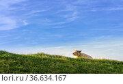 ESY-059913930. Стоковое фото, фотограф Zoonar.com/Karl Heinz Spremberg / easy Fotostock / Фотобанк Лори