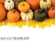 Many pumpkins and leaves frame. Стоковое фото, фотограф Иван Михайлов / Фотобанк Лори