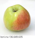 Kriwitzer-Apfel, Apfelsorte, Apfel, Kernobst, Obst, Стоковое фото, фотограф Zoonar.com/Manfred Ruckszio / age Fotostock / Фотобанк Лори