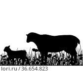 Schaf und Lamm auf Weide. Стоковое фото, фотограф Zoonar.com/lantapix / easy Fotostock / Фотобанк Лори