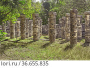 Detail filtered by the vegetation of the columns of the Temple of... Стоковое фото, фотограф Filippo Carlot / age Fotostock / Фотобанк Лори