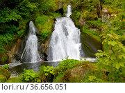 Schwarzwald, Baden-Württemberg, Hochschwarzwald, Triberg, Wasserfall... Стоковое фото, фотограф Zoonar.com/Bildagentur Geduldig / easy Fotostock / Фотобанк Лори