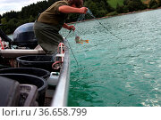 Fisch im Netz. Стоковое фото, фотограф Zoonar.com/Rüdiger Rebmann / easy Fotostock / Фотобанк Лори