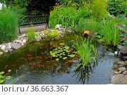 Gartenteich mit Goldfischen, Gartenbank, Стоковое фото, фотограф Zoonar.com/Bildagentur Geduldig / easy Fotostock / Фотобанк Лори