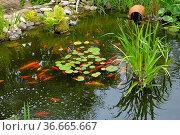 Gartenteich mit Goldfischen, Стоковое фото, фотограф Zoonar.com/Bildagentur Geduldig / easy Fotostock / Фотобанк Лори