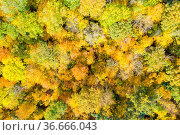 Hintergrund Wald Bäume Baum im Herbst bunte Blätter Jahreszeit Drohne... Стоковое фото, фотограф Zoonar.com/Markus Mainka / easy Fotostock / Фотобанк Лори