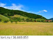 Schwarzwald, Baden-Württemberg, Hochschwarzwald, Glottertal, mit ... Стоковое фото, фотограф Zoonar.com/Bildagentur Geduldig / age Fotostock / Фотобанк Лори