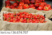 Juicy red tomatoes and peppers are sold in market. Стоковое фото, фотограф Валерия Попова / Фотобанк Лори