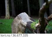 Baumstumpf im Wald, Deutschland. Стоковое фото, фотограф Zoonar.com/Karl-Heinz Spremberg / easy Fotostock / Фотобанк Лори