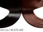 Closeup on luxurious straight glossy hair. Стоковое фото, фотограф Zoonar.com/Tomas Anderson / easy Fotostock / Фотобанк Лори