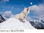 Der Sprung nach dem Schneeball. Стоковое фото, фотограф Zoonar.com/Monika Scheurer / easy Fotostock / Фотобанк Лори