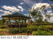 Bontanical garden at Batu Kawa Water Front, Kuching, Sarawak, East... Стоковое фото, фотограф Chua Wee Boo / age Fotostock / Фотобанк Лори