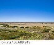 Chesil beach, an 18 mile long pebble and shingle tombolo connecting... Стоковое фото, фотограф Mehul Patel / age Fotostock / Фотобанк Лори