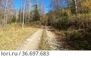 Video of driving along muddy mountain road along Altai river Kumir in Autumn. Стоковое видео, видеограф Serg Zastavkin / Фотобанк Лори