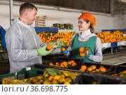 Man controlling process of sorting of mandarins. Стоковое фото, фотограф Яков Филимонов / Фотобанк Лори