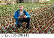 Farmer cultivating tomatoes. Стоковое фото, фотограф Яков Филимонов / Фотобанк Лори