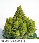 Blumenkohl, Minaret, Brassica oleracea botrytis, Kohl, Стоковое фото, фотограф Zoonar.com/Manfred Ruckszio / age Fotostock / Фотобанк Лори