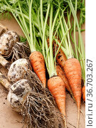 A close up photo of freshly harvested garlic bulbs and carrots in... Стоковое фото, фотограф Zoonar.com/Gregory Johnston / easy Fotostock / Фотобанк Лори