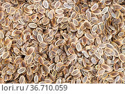 Food background - many dried dill seeds. Стоковое фото, фотограф Zoonar.com/Valery Voennyy / easy Fotostock / Фотобанк Лори