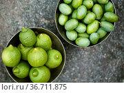 Frisch vom Baum gepflückte Grüne Zitronen und Oliven in Italien. Стоковое фото, фотограф Zoonar.com/Nailia Schwarz / easy Fotostock / Фотобанк Лори