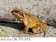 ESY-060006904. Стоковое фото, фотограф Zoonar.com/Judith Dzierzawa / easy Fotostock / Фотобанк Лори