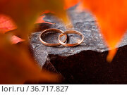Two wedding-ring on old yellow foilage. Стоковое фото, фотограф Zoonar.com/Photographer: Andrey N.Cherkasov / easy Fotostock / Фотобанк Лори